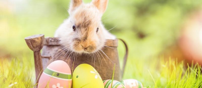decoration-bunny-easter-paskha-happy-iaitsa-krashenye-spring